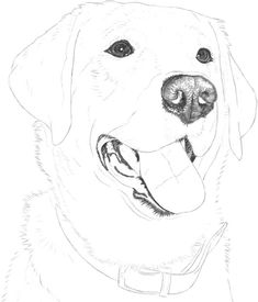 Drawing labrador retriever - dogs & cats / drawing: learn to draw Dog Outline, Outline Drawings, Animal Drawings, Pencil Drawings, Custom Dog Portraits, Pet Portraits, Tattoo Pitbull, Diy Dog Gate, Silhouettes