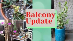Summer 2021 Balcony Update | The Good 😊and The Bad 😩.