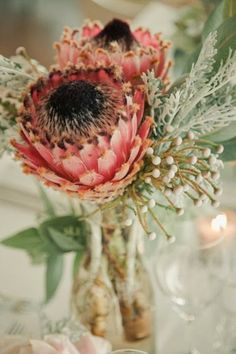 Protea cynaroides is adapted to survive wildfires by its thick underground stem, which contains many dormant buds; these will produce the new growth after the fire. Protea is the national flower of South Africa