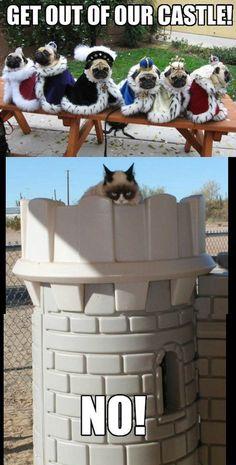 Awe mean kitties