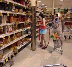 Shopping with my pet kangaroo !