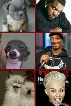 Ice Cube, Snoop Dogg, Miley Cyrus compared to animals