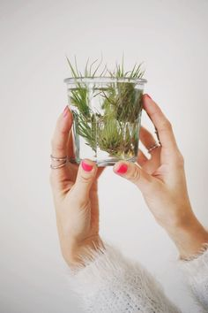 How to Care for Air Plants /