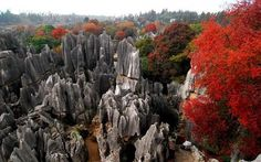 The Stone Forest (3)
