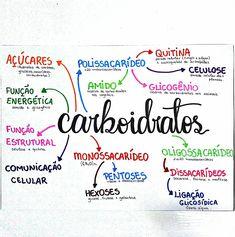 Mapa Mental de Biologia : Carboidratos Study Biology, Medicine Notes, Mental Map, Study Cards, Study Organization, Study Quotes, School Study Tips, School Subjects, School Notes