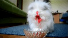 THIS IS SO CUTE BUT ALSO SO SCARY. | This Bunny Eating Fruit Is Cute And Terrifying At The Same Damn Time