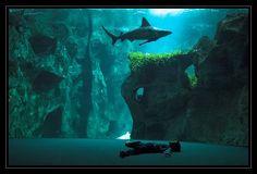 L'aquarium - La Rochelle (The aquarium of the small rock = translation)