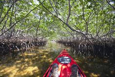 kayaking through the mangrove tunnels in the Key Largo flats