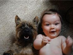 Dog and baby love! #cairnterrier