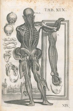 "Pietro da Cortona and Gaetano Petrioli : ""Tabulae Anatomicae, Plate Medical Illustration, Nature Illustration, Anatomy Images, Baroque Architecture, Medical Art, Italian Painters, Human Art, Renaissance Art, Picture On Wood"