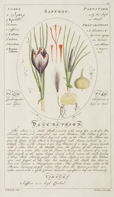 Saffron -- Botanical Plates -- RHS Prints