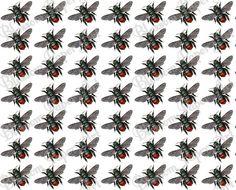 Flies Digital Patterned Paper - Cardmaking - Scrapbooking - Collage Sheet - Transfer - Digital Paper - Background