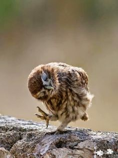 The 100 greatest owl pictures you'll ever see - DANCE Owl Pictures, Cute Animal Photos, Funny Animal Pictures, Funny Animals, Cute Animals, Happy Animals, Wild Animals, Pretty Pictures, Funny Cats