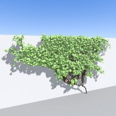 ivy 3D Object   FREE Artlantis Objects Download Nature Tree, Ivy, Objects, Scene, Herbs, Architecture, Plants, Trendy Tree, Arquitetura