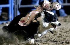 in love with this photo, this monkey, this dog, and the humans who put this rodeo idea together...