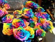 trandafiri curcubeu - Google Search