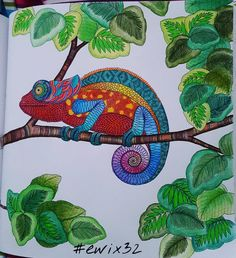 #milliemarotta #animalkingdomcolouringbook #colouringbook #coloringbook…