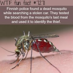 The best detectives in the world - WTF fun fact