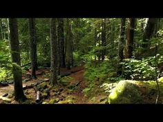 Drone Footage flying in wonderful woods in nature landscape Louise Hay, Photography Projects, Nature Photography, Sound Of Rain, Rain Sounds, Pink Nature, Outdoor Hats, Save Nature, Tropical