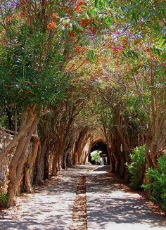The beautiful streets of #Byblos, the oldest continuously inhabited city in the world, #Lebanon