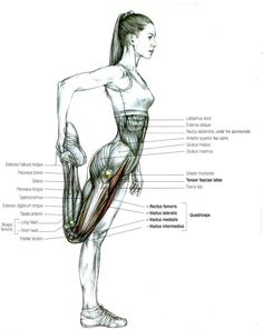 Stretching: How to Stretch the Quadriceps - Baby Boomer Fitness Challenge Muscle Anatomy, Body Anatomy, Human Anatomy, Runners Knee, Coach Sportif, Anatomy And Physiology, Exercise Physiology, Anatomy Reference, Yin Yoga