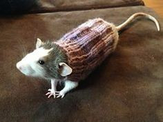 Rat sweater. Yep. I wanna r how to knit one of these bad boys!!