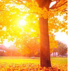 Comment l'automne affecte votre santé