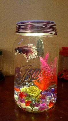 36 Excellent Diy Fish Tank Design Ideas With Mason Jar To Try Asap - If you're serious about your betta fish care then it's important to set up a great betta aquarium. While your fish can live in a small bowl or jar it . Small Fish Tanks, Cool Fish Tanks, Betta Fish Tank, Beta Fish, Mason Jar Crafts, Mason Jar Diy, Diy Tank, Aquarium Design, Exotic Fish