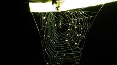 lampione e ragnatela (ecco dove si nasconde il ragno)
