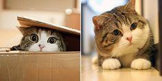 Maru le chat : la star du web est détenteur d'un record !