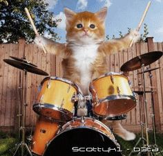 Kitten playing the drums GIF / Drummer Cats: A Magazine About Feline Drummers Animals And Pets, Baby Animals, Funny Animals, Cute Animals, Kittens Playing, Cats And Kittens, Kittens Meowing, Kittens Cutest, Cute Cats