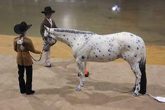 Braymere Custom Saddlery: Almost wordless Wednesday