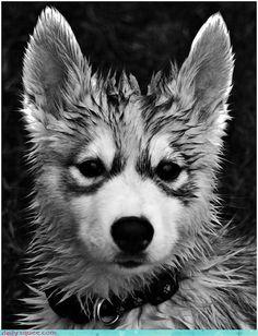 Wet Woofer. S)