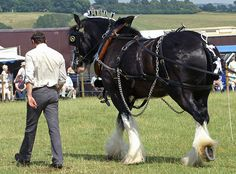 Heavy Horse by Dave Hamster on Flickr.
