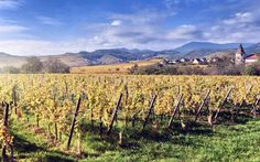 Alsace wine tour: In search of the world's greatest white wines