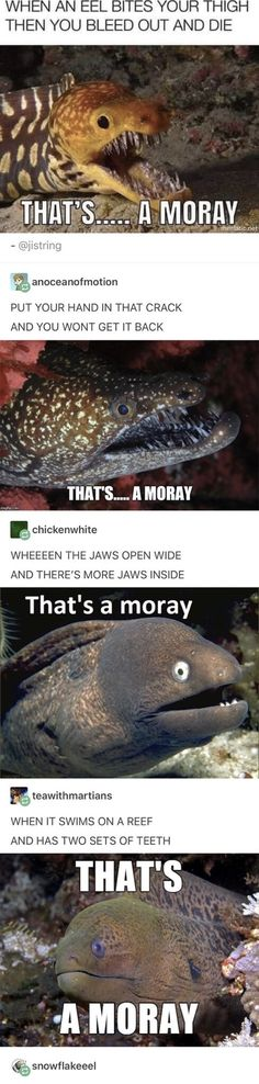 Post with 4467 votes and 145601 views. Tagged with funny, meme, lol, sealife, dank memes; Kept me chuckling all morning ?