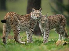 "beautiful-wildlife: "" That's my big brother! by Stefan Rosengarten """
