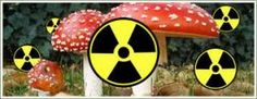 The Chernobyl nuclear disaster killed most life forms. Except this one.
