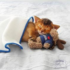 From @virinka: Тссс не разбудите Греночку. Пусть спит дитя полночи носилась очень устала)) #cutepetclub [source: http://ift.tt/2pMJNz1 ]