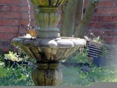Robin takes a shower at a fountain.