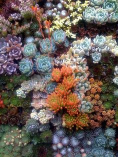 I love the bright colors of succulents. You just don't get those colors with many other plants.