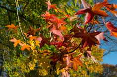 Color Sneaking In by Amie Croteau - Photo 127906479 - 500px