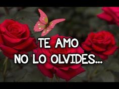 Quotes For Him, Love Quotes, Love Rose Flower, Amor Quotes, Love Phrases, L Love You, Gif Pictures, Love Images, Spanish Quotes