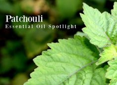 Patchouli Essential Oil Uses Patchouli Oil, Patchouli Essential Oil, Essential Oil Uses, Natural Bug Spray, Vegetarian Lifestyle, Citrus Oil, Aromatherapy, Essentials, Oil Benefits