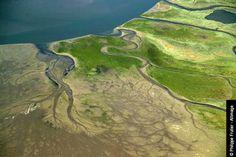 L'estuaire de l'Authie se trouve dans le Marquenterre à la limite littorale maritime entre la Somme et le Pas-de-Calais.The estuary of the Authie is found in the Marquenterre, the coastal boundry between the Somme & the Pas-de-Calais.