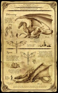 Dragonkin Part II - Silverwing and Syrax by Feliche chart | Create your own roleplaying game material w/ RPG Bard: www.rpgbard.com | Writing inspiration for Dungeons and Dragons DND D&D Pathfinder PFRPG Warhammer 40k Star Wars Shadowrun Call of Cthulhu Lord of the Rings LoTR + d20 fantasy science fiction scifi horror design | Not Trusty Sword art: click artwork for source