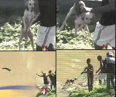 Stupid asses feeding dogs to the crocodiles !!!  http://www.gopetition.com/petitions/help-for-the-animal-house-jamaica/sign.html  (petição permanente de pedido de ajuda para associação protetora dos animais da Jamaica)    VEJAM QUE ABSURDO:  http://www.youtube.com/watch?v=mdmU5mAfn68