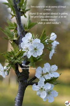 Good Day, Good Morning, Bloom, Plants, Buen Dia, Buen Dia, Hapy Day, Bonjour, Plant