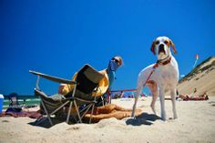 A dog and people spending the day on Marconi Beach in Cape Cod - Dog Friendly Beaches On Cape Cod - On The Beach, Where To Go - By: Jay Stebbins