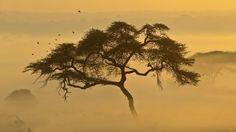 Morning by Scott Hanson on 500px
